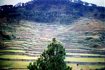 sagada rice terraces mountain province